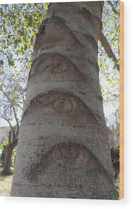 Eyes Wood Print featuring the photograph Aspen Eye by Shannon Grissom