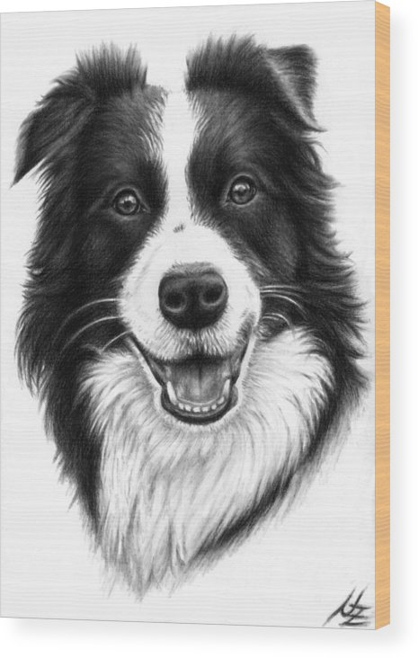Dog Wood Print featuring the drawing Border Collie by Nicole Zeug