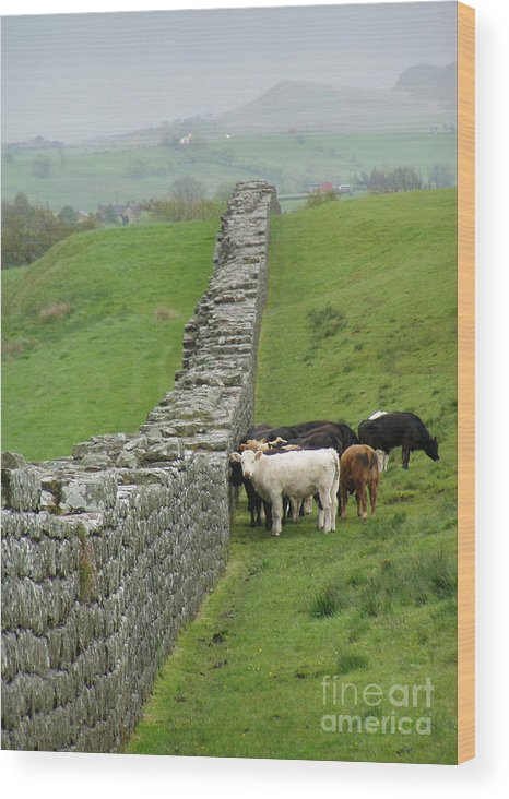 Scotland Wood Print featuring the photograph Hangin Out At Hadrians Wall England Scotland by Lesley Nolan