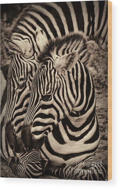 Foal Wood Print featuring the photograph Mothers Embrace by Joshua Roberts
