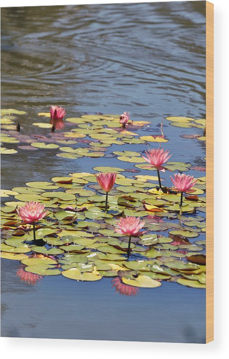 Botanical Wood Print featuring the photograph Sparkling Like Jewels by Sandy Fisher