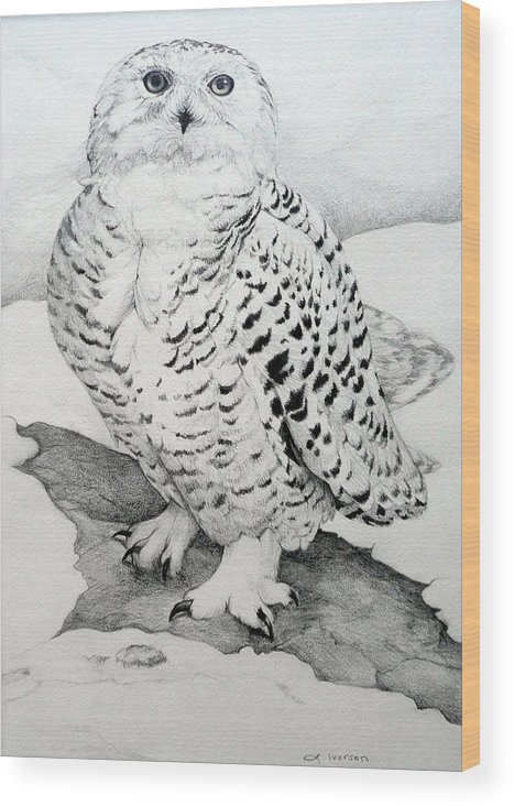 Snowy Owl Wood Print featuring the drawing Snowy Owl by Jill Iversen