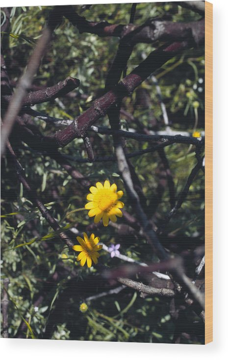 Flower Wood Print featuring the photograph The Prisoner by Randy Oberg