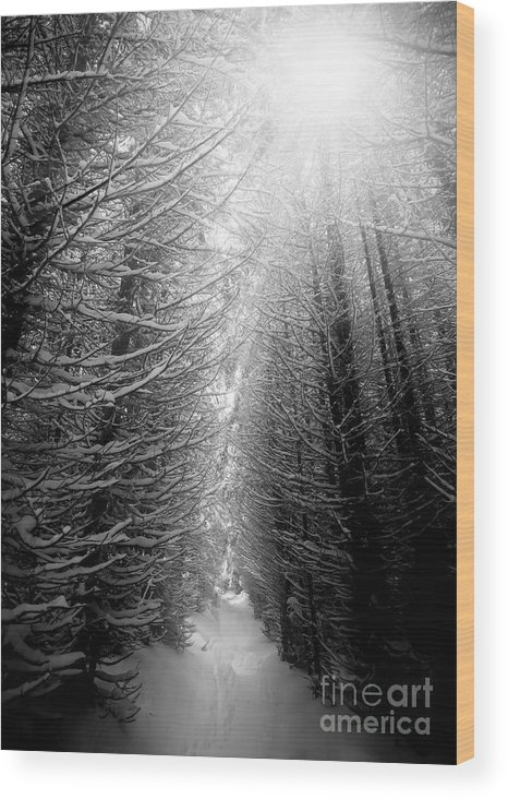 Magic Wood Print featuring the photograph Black And White Winter Forest, Vertical by Ssokolov