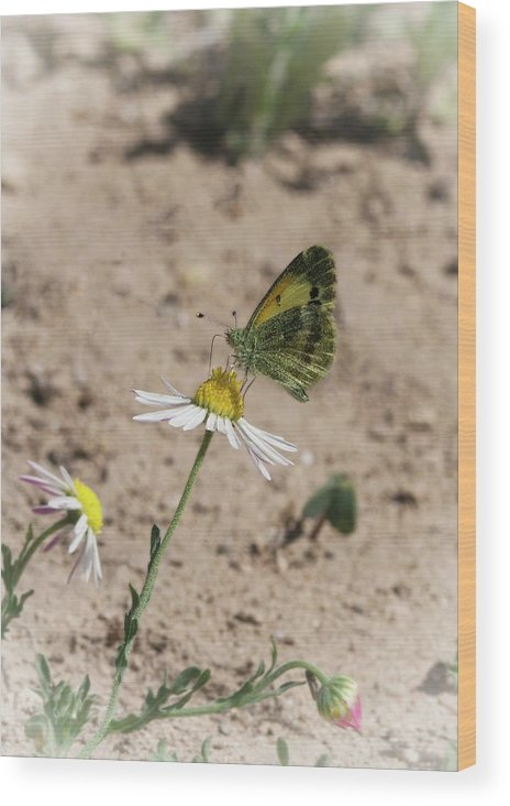 Betty Depee Wood Print featuring the photograph Butterfly Day by Betty Depee