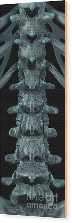 Lumbar Vertebrae Wood Print featuring the photograph The Lumbar Vertebrae Wireframe by Science Picture Co
