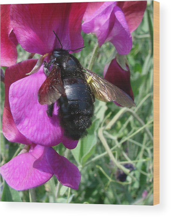 Flowers Wood Print featuring the photograph Bee On A Sweetpea 2 by Liz Vernand