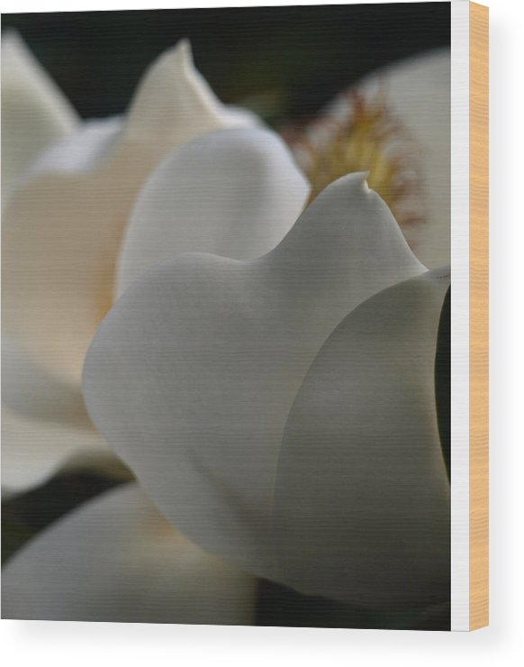 Magnolia Wood Print featuring the photograph Soft White by Kim