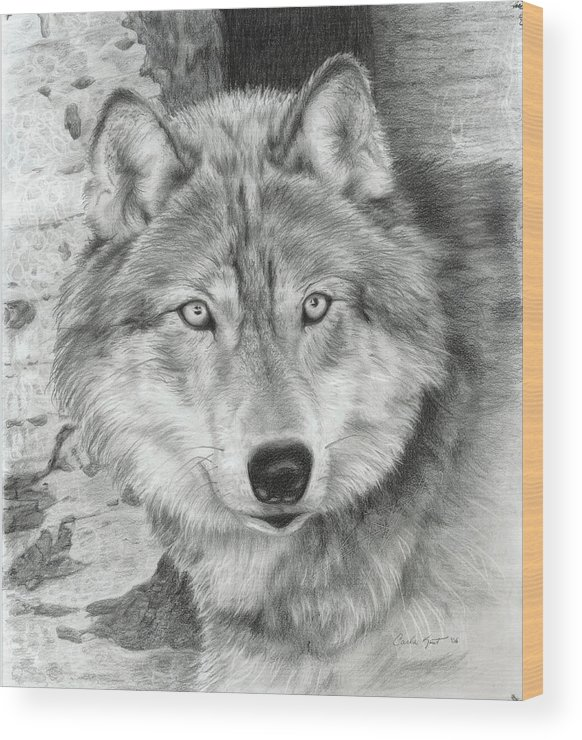 Pencil Wood Print featuring the drawing Watchful Eyes by Carla Kurt