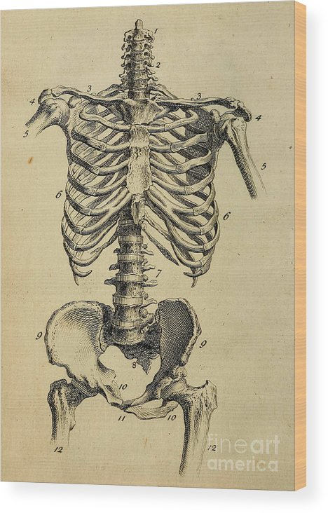 Anatomy Human Body Old Anatomical 138 Wood Print by Boon Mee