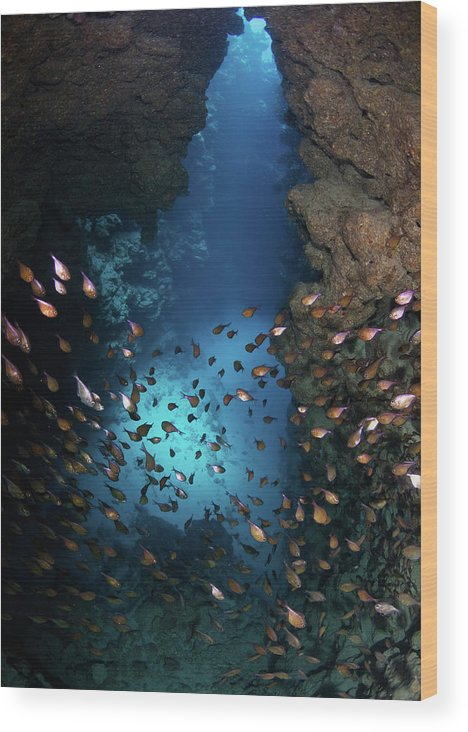 Underwater Wood Print featuring the photograph Canyon by Nature, Underwater And Art Photos. Www.narchuk.com