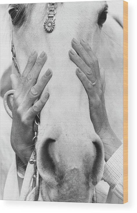 Animal Wood Print featuring the photograph Conchita Cintron Holding The Head Of A Horse by Henry Clarke