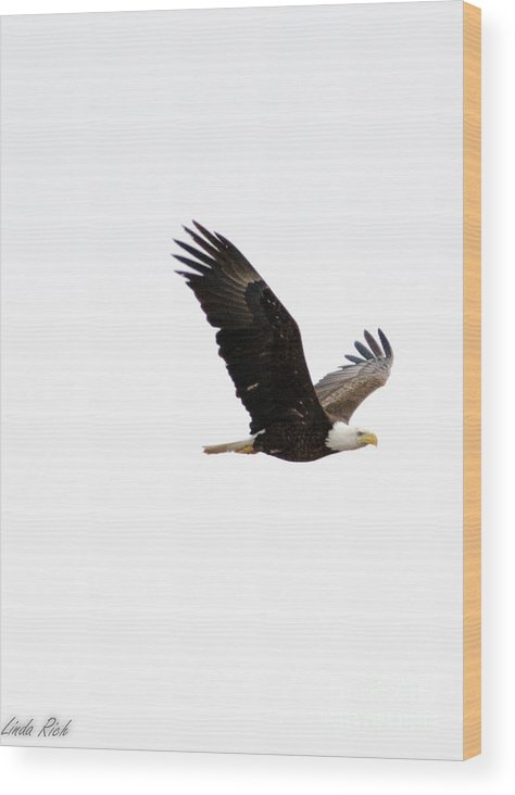 Wood Print featuring the photograph Eagle by Linda Rich