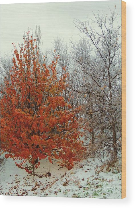 Fall Wood Print featuring the photograph Fall And Winter 2 by Robert ONeil