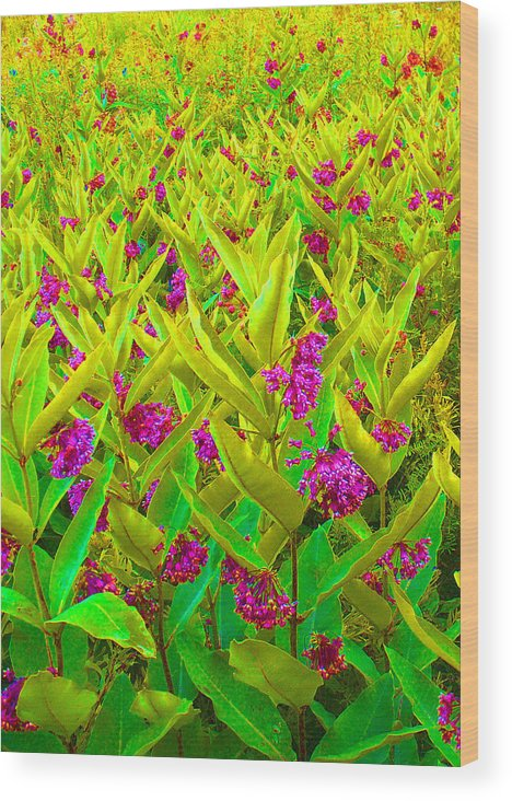 Flowers Wood Print featuring the photograph Field Of Flowers by Lynda Davis