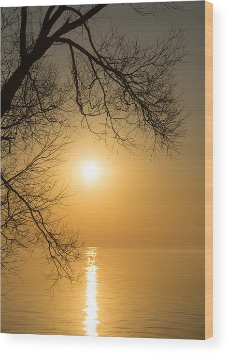 Golden Wood Print featuring the photograph Framing The Golden Sun by Georgia Mizuleva