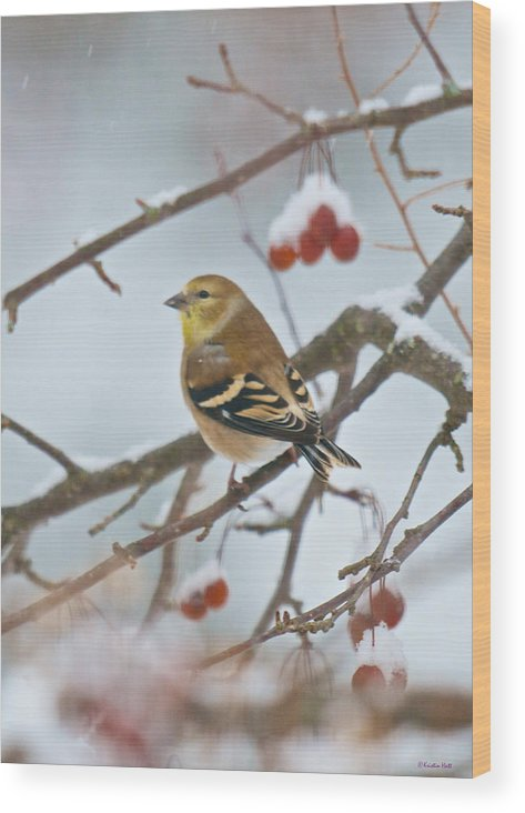 Birds Wood Print featuring the photograph Goldfinch In Snow by Kristin Hatt