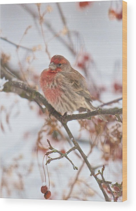 Bird Wood Print featuring the photograph I Cannot Believe It Is So Cold by Kristin Hatt