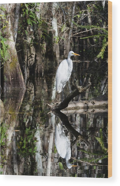 Florida Wood Print featuring the photograph I Feel Pretty by Georgette Grossman