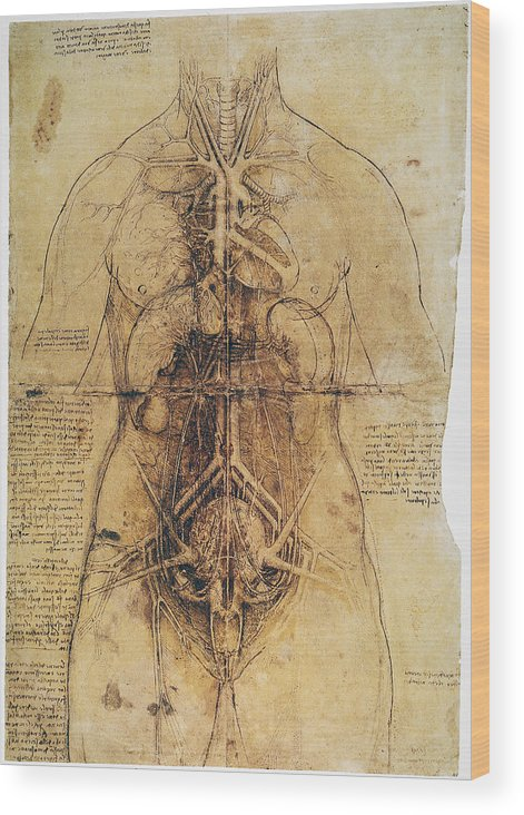 1510 Wood Print featuring the photograph Leonardo: Anatomy, C1510 by Granger