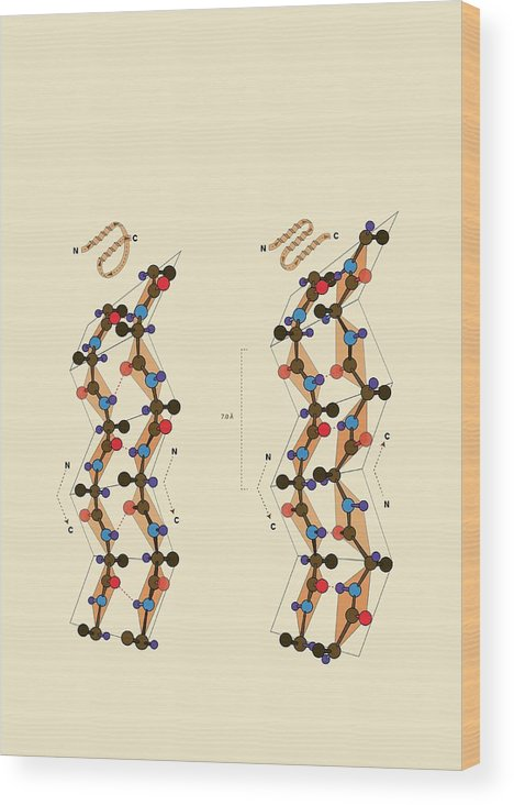 Nobody Wood Print featuring the photograph Protein Beta Sheets by Ramon Andrade 3dciencia