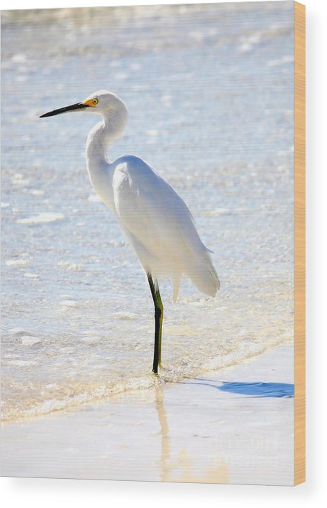 Egret Wood Print featuring the photograph Egret On The Beach by Carol Groenen