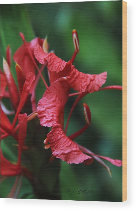 Floral Wood Print featuring the photograph A Different Point Of View by Kerri Ligatich