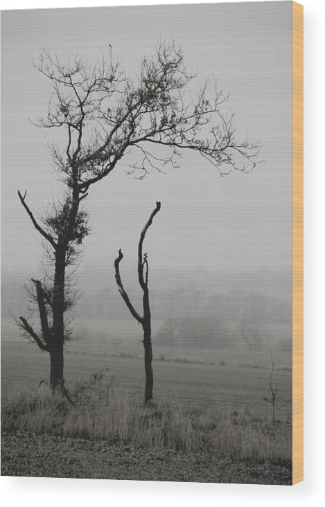 Trees Wood Print featuring the photograph Frail Sentinels by Odd Jeppesen