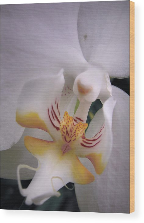 Orchid Wood Print featuring the photograph Orchid Close Up Two by Nancy Griswold