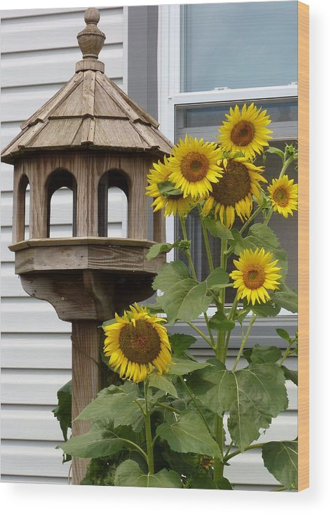 Flowers Wood Print featuring the photograph Sunflower Bird Feeder by Jeanette Oberholtzer