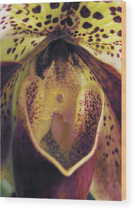 Orchid Wood Print featuring the photograph The Orchid Center by Nancy Griswold