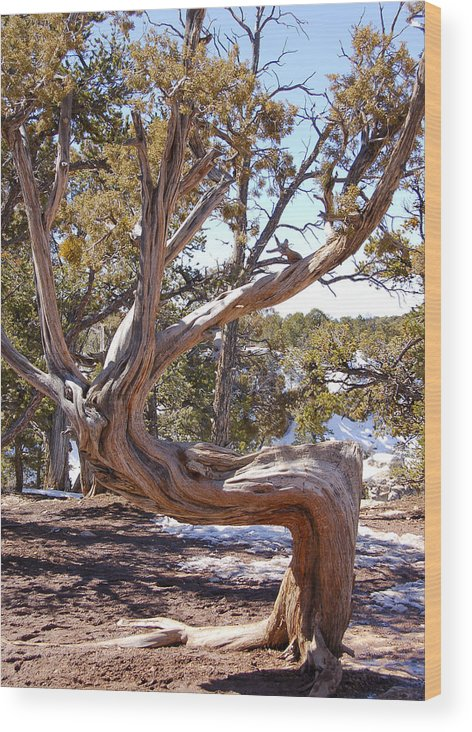 Grand Canyon Wood Print featuring the photograph Weathered Tree by Aisha Karen Khan