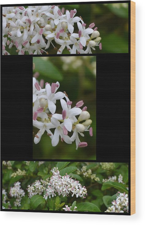 Macro Wood Print featuring the photograph Zoooom by George Bostian