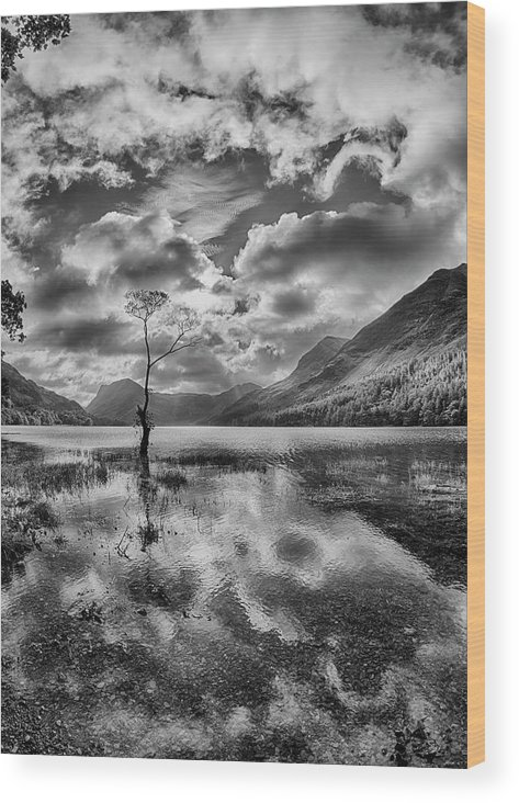 Buttermere Wood Print featuring the photograph Buttermere Tree by Graham Moore