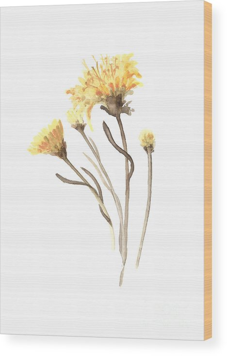 Yellow Wood Print featuring the painting Aster Flower Watercolor Art Print Painting by Joanna Szmerdt