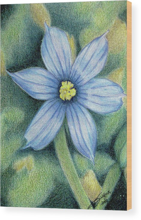 Fuqua - Artwork Wood Print featuring the drawing Blue Eyed Grass - 1 by Beverly Fuqua