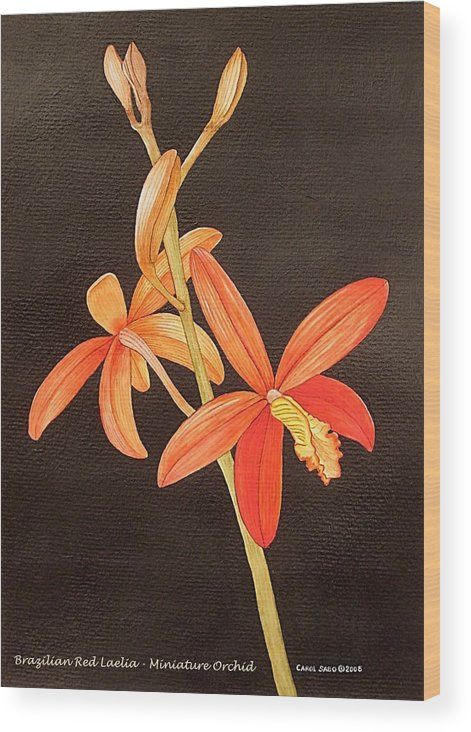 Art Wood Print featuring the painting Brazilian Red Laelia-miniature Orchid by Carol Sabo
