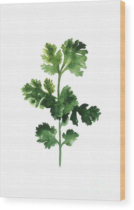 Cilanto Wood Print featuring the painting Cilantro Watercolor Art Print Painting by Joanna Szmerdt