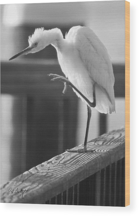 Birds Wood Print featuring the photograph Egret Tai Chi by Phill Doherty