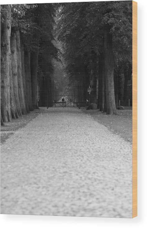Park Wood Print featuring the photograph Gated Path by Edward Myers
