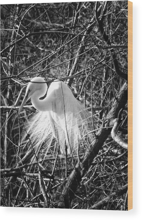 Birds Wood Print featuring the photograph In The Trees by Phill Doherty
