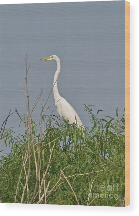 Egret Wood Print featuring the photograph King Of The Bush by Carol Bradley