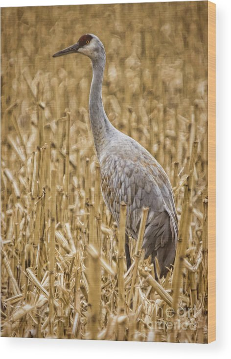 Nature Wood Print featuring the photograph King Of The Delta Cornfield by Janice Pariza