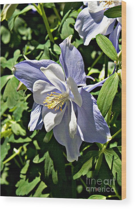Floral Wood Print featuring the photograph Light Blue by Robert Sander