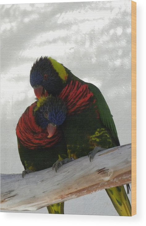 Bird Wood Print featuring the photograph Loving Lorikeets by Janet Dickinson