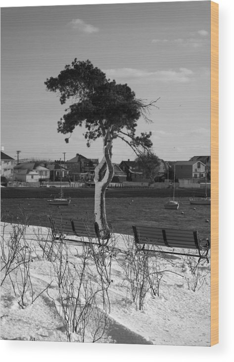Black Wood Print featuring the photograph One Sided by Becca Brann