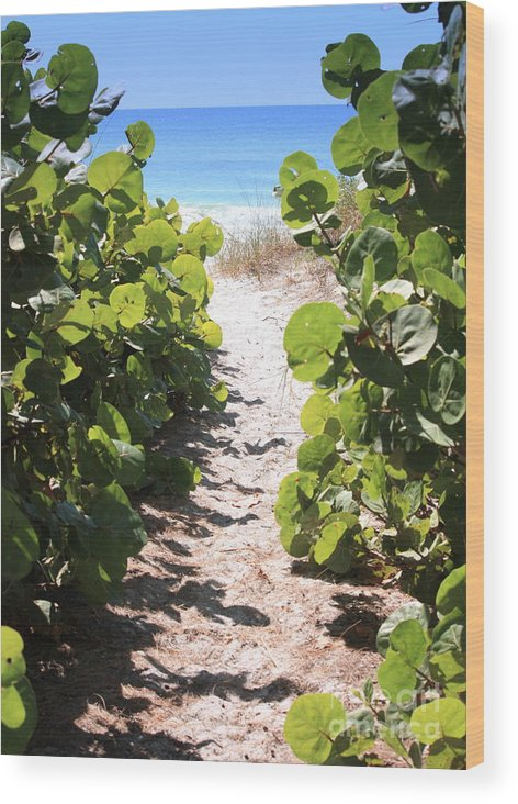 Path Wood Print featuring the photograph Path To Beach by Carol Groenen