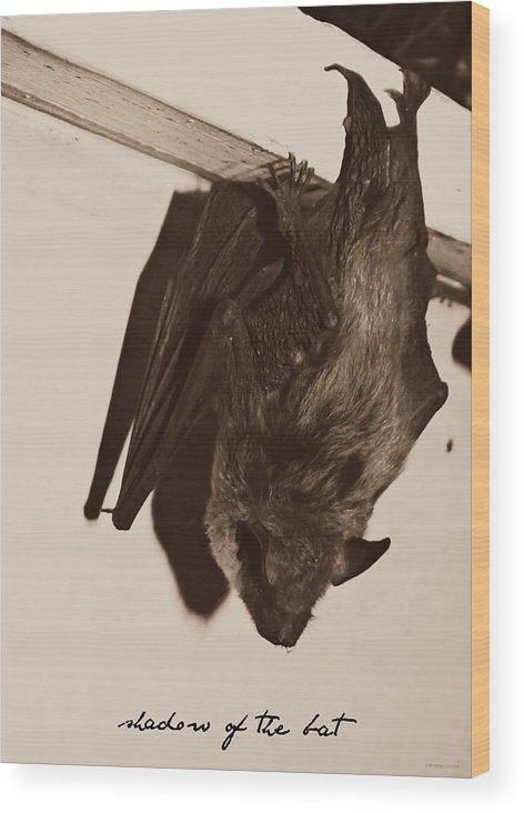 Shadow Of The Bat Wood Print featuring the photograph Shadow Of The Bat by Brenda Conrad