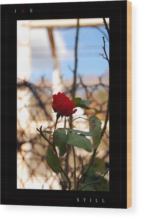 Rose Wood Print featuring the photograph Still by Jonathan Ellis Keys
