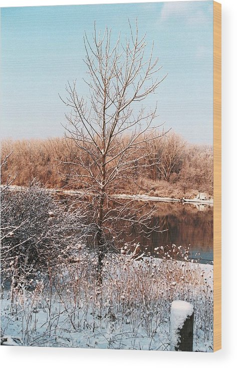 Tree Wood Print featuring the photograph The Colors Of Winter by Jennifer Englehardt